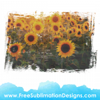 Free Sublimation Print Sunflowers Distressed Vintage Background